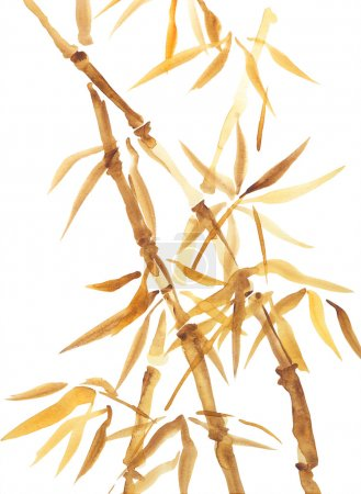 Photo for Asian watercolor painting of bamboo. Original Chinese style aquarelle drawing on white background - Royalty Free Image
