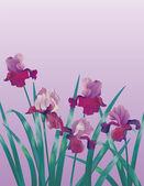 Background with iris