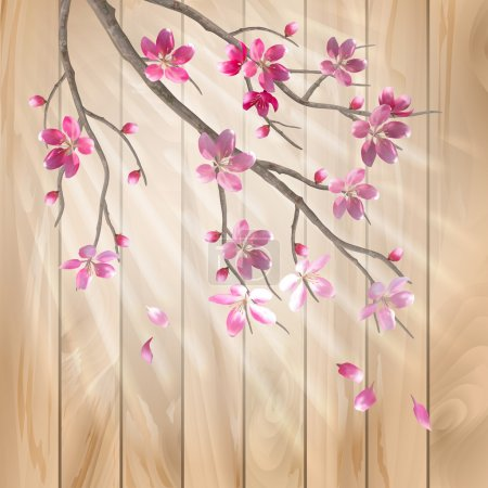 Illustration for Spring cherry blossom flowers on a wood texture. Floral artistic vector design with beautiful pink cherry (plum) blooming flowers, tree branch, fall petals, sun rays, light effect on a wooden fence - Royalty Free Image