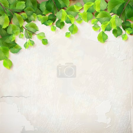 Illustration for Vector season background with tree branches, green leaves, decorative white plaster wall backdrop with subtle delicate grunge texture of surface - Royalty Free Image