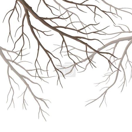 Illustration pour Arbre vecteur réaliste branches silhouette isolée sur fond blanc - image libre de droit