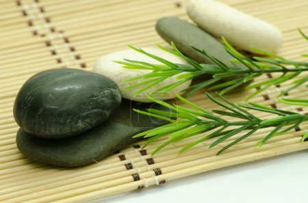 River stones with rosemary