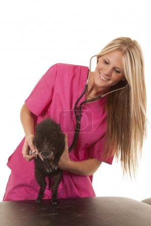 Photo pour Femme vétérinaire stéthoscope et porc - image libre de droit