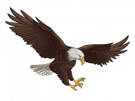 Vector illustration of a Bald Eagle, isolated on a...