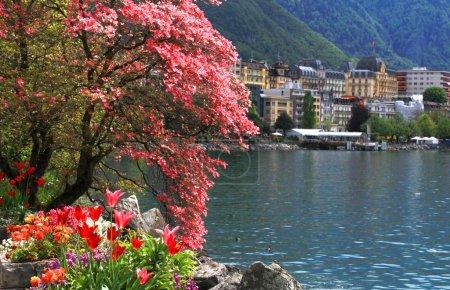 Photo pour Un paysage beau printemps avec fleurs et fleurs branche de magnolia, lac Léman vue de montreux, Suisse. mise au point sélective - image libre de droit