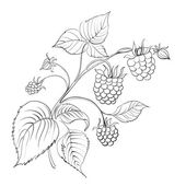 Raspberry branch with ripe berry isolated on white Vector illustration
