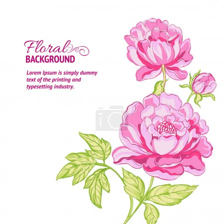 Illustration for Pink peonies background with sample text. Vector illustration. - Royalty Free Image