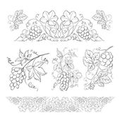 Hand drawn of pencil grapes set Vector illustration