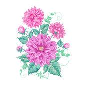 Chrysanthemum isolated over white Vector illustration