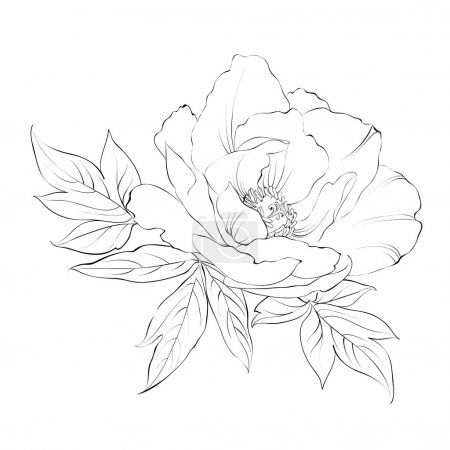 Illustration for Ink Painting of Peony isolated on white. Vector illustration. - Royalty Free Image