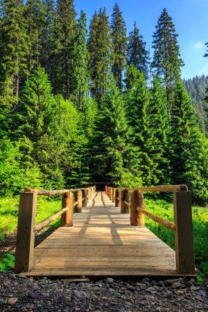 Photo pour Pont en bois s'étendant dans les profondeurs de la forêt verticale - image libre de droit