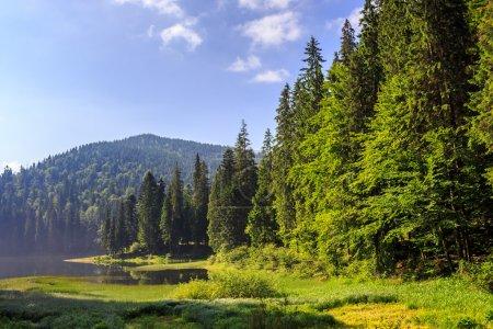 Photo pour Lac dans les montagnes entouré d'une forêt de pins tôt le matin - image libre de droit