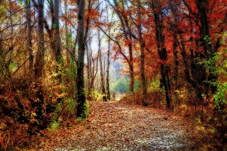 Photo for Enchanted Forest Path in Rural Minnesota in Indian Summer - Royalty Free Image