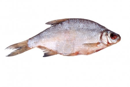 One dried whole sea roach isolated on white...