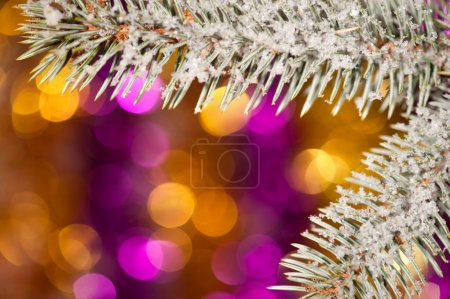 Photo for Fir tree branch with snow on golden bokeh background - Royalty Free Image