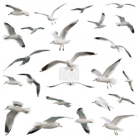 white birds set. isolated on white