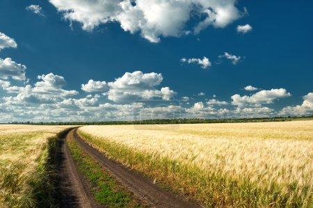 ground road in wheaten field