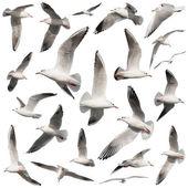 "Постер, картина, фотообои ""коллекция птиц на белом"""