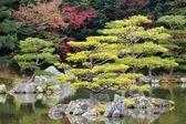 Albero di pino Zen