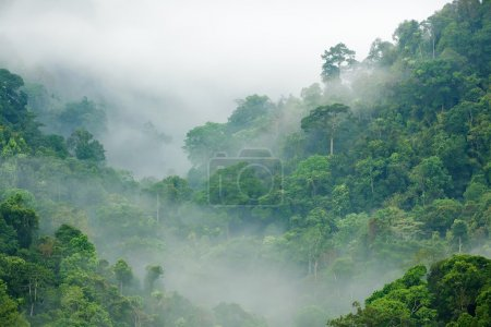 Photo pour Brume matinale en forêt tropicale dense, kaeng krachan, Thaïlande - image libre de droit