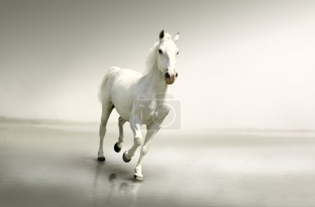 Beautiful white horse in motion