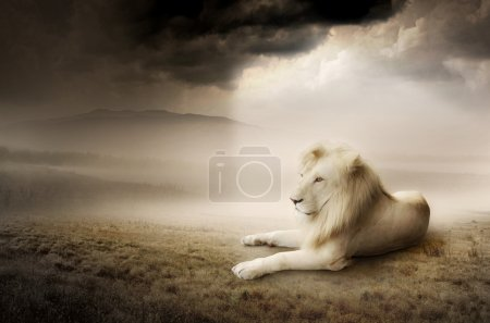 White lion at sunset