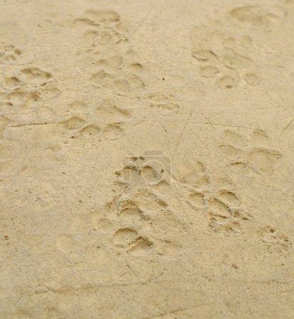 Photo pour Empreintes de chien sur le plancher de ciment - image libre de droit