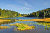 Great Lake Arber ,Bavaria,Germany