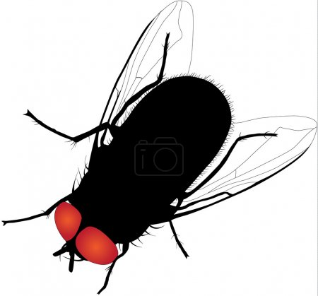 House fly vector silhouette on white background. Fully editable