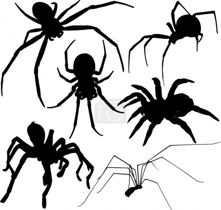 Spider vector silhouettes. Layered. Fully editable.