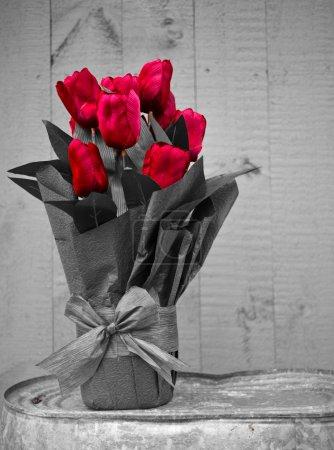 Photo pour Fleurs de tulipe rouge vif se détachent sur un fond monochrome . - image libre de droit