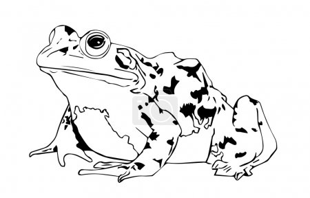 Toad black and white