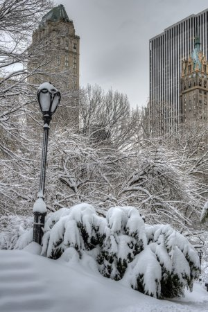 Central Park, New York City blizzard
