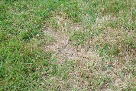 Unhealthy grass