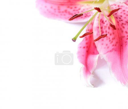 Lily floral template