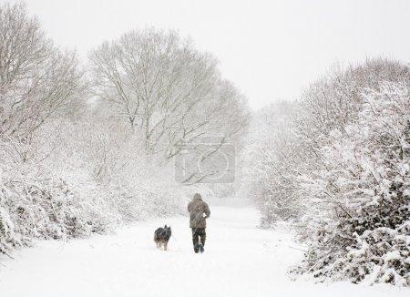 Photo pour Un homme promène son chien dans les bois enneigés en hiver - image libre de droit