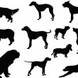 Illustration of dogs collection - vector