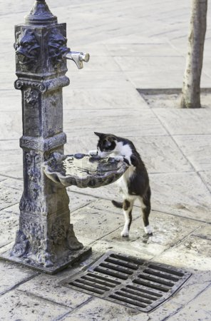 Cat in drinking water source in the street, animal...