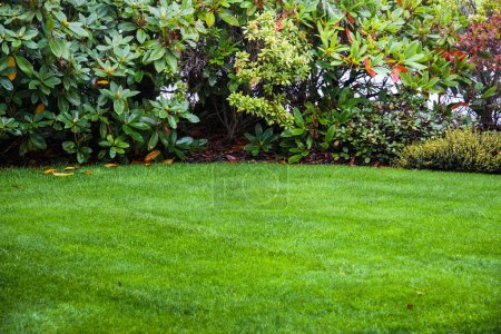 Photo for Idyllic lawn and shrubs on an early fall day - Royalty Free Image