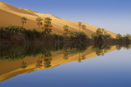Oasis. Libyan Desert.