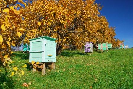 Honey bee hives