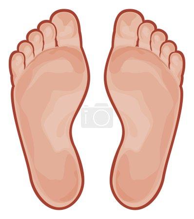 Illustration pour Deux pieds isolés sur blanc - image libre de droit