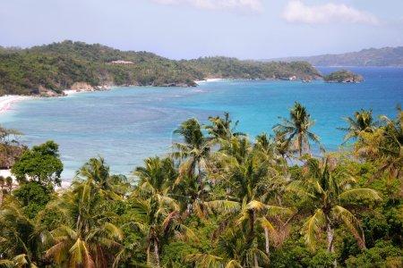 tropical beach and palmtrees