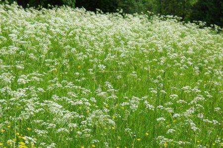 Foto de Hierba verde - Imagen libre de derechos