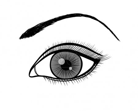 Illustration for Monochrome black and white outline of a female eye. Many similarities to the author's profile - Royalty Free Image