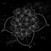 Beautiful monochrome black and white flower hydrangea isolated Hand-drawn contour lines and strokes