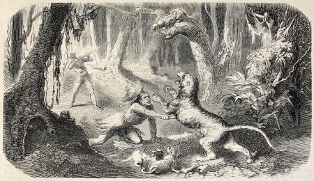 Fighting wild beast