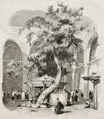 Kesmas-el-Baradeyeh
