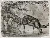 Jaguar fishing