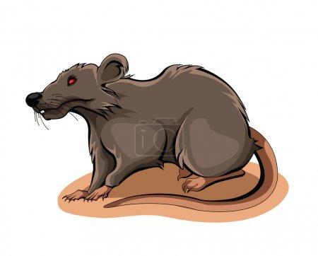Rat vector